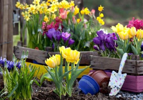 Аксесоари за градината