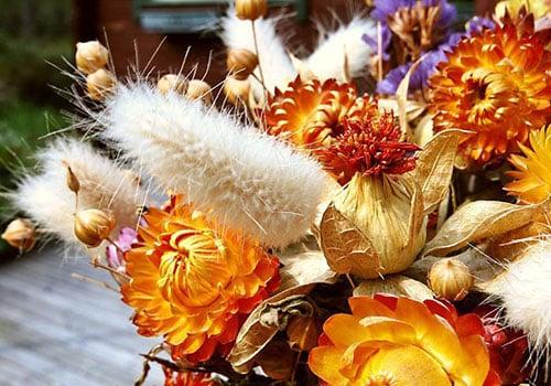 Сухи цветя-на промоционални цени
