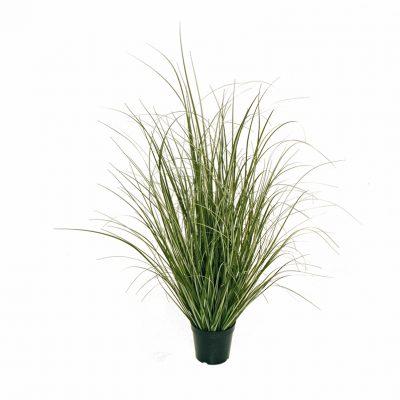 Тропически растения