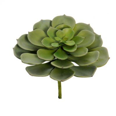Сукулентни Растения