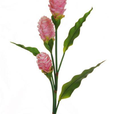 Тропически цветя