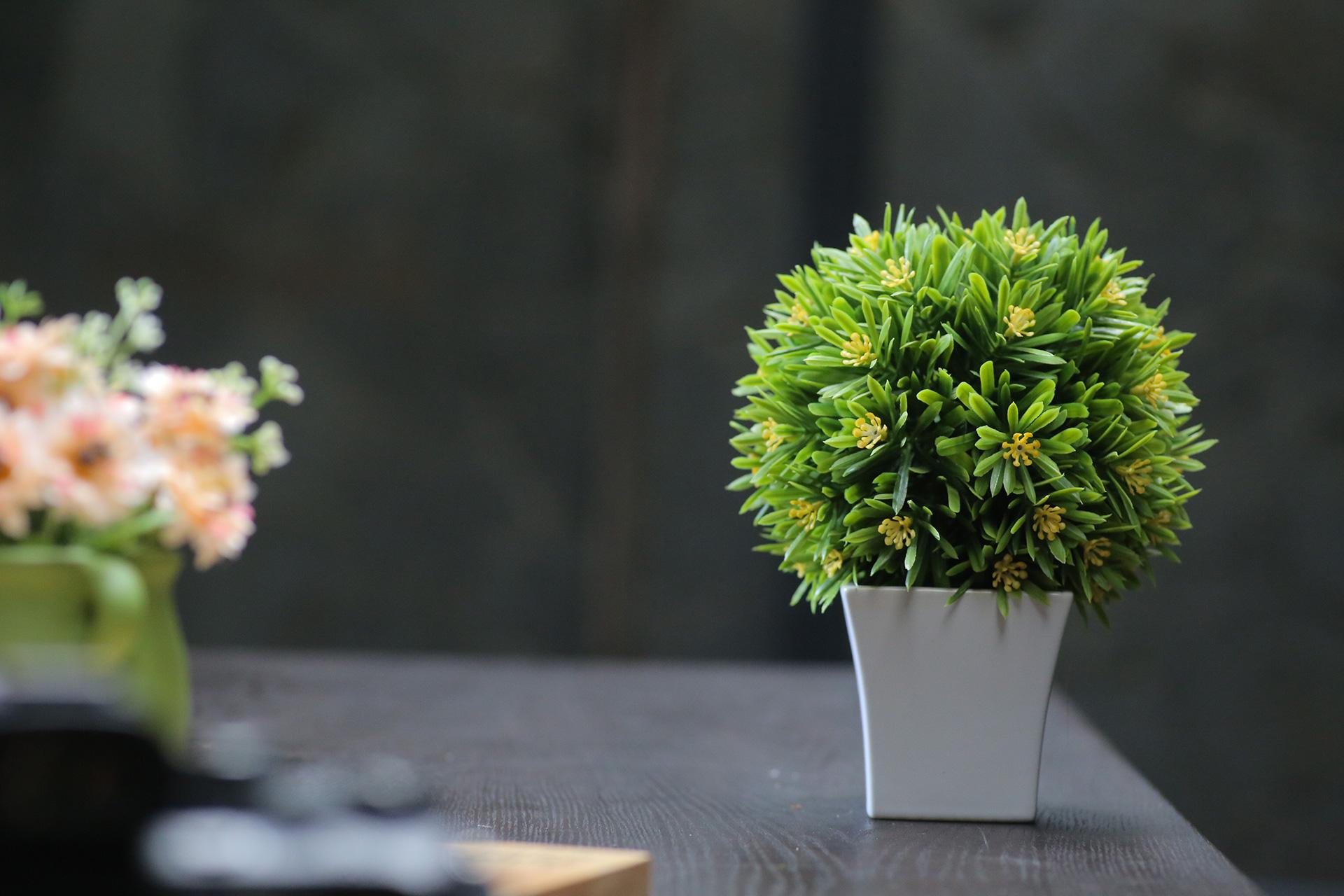 Какво е важно да знаем за подръжката на изкуствените цветя