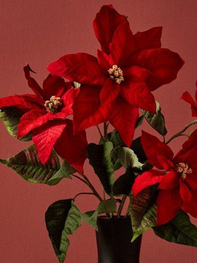 Коледни звезди и Цветя