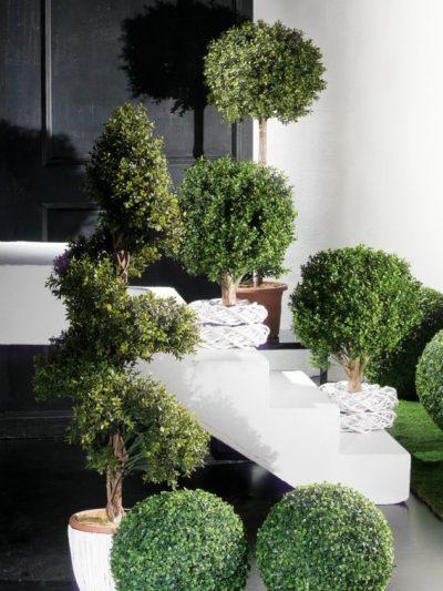 Външни растения
