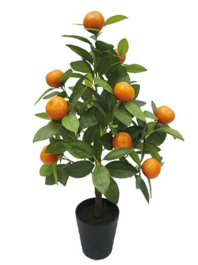 Портокалови и Лимонови дръвчета